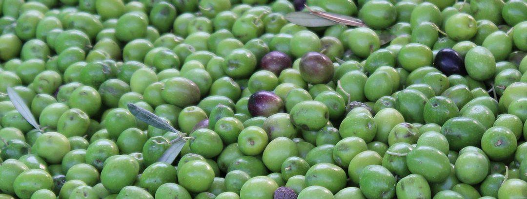 ¿Conoces los aceites de oliva de Almazaras de la Subbética?